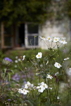 anemones-white-britt-willoughby-dyer-gardenista-BN2A0033