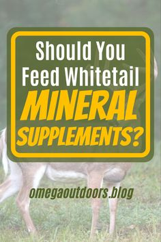 If you are like I was before this article, you probably do not take the time to think about your whitetail mineral supplements or what goes into them. A simple mix by a big brand or a bag of corn was good enough in my mind. After doing some research and talking to experts in the field I have learned that it is not all about salt or filler and that many brands including BIG brands are just straight-up ripping us off. When you dive into the science behind Mineral supplements, you open an…