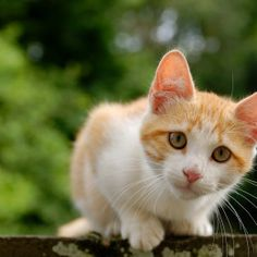 bf19c6447cc8 Petitions  Kitten Thrown Out Car Window Deserves Justice