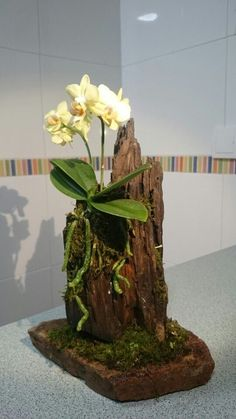 Orchid mounted on an old weathered wood log with stand