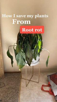 Lawn And Garden, Indoor Garden, Garden Plants, Indoor Plants, Outdoor Gardens, Succulent Arrangements, Planting Succulents, Planting Flowers, Container Plants