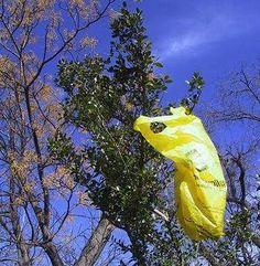 Dallas bag fee aims to reduce plastic bag litter Dallas City, Environmentalist, Go Green, Trade Show, United States, Plastic, Blog, Earth, News