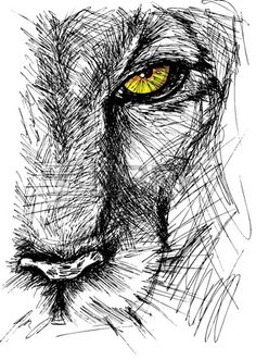 Hand drawn Sketch of a lion looking intently at the camera.
