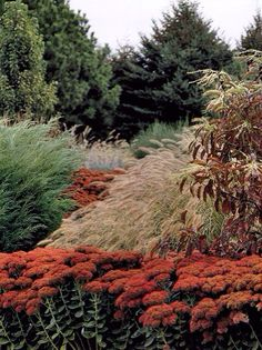 An autumn garden with sedum autumn joy and ornamental grasses Plant Design, Garden Design, Beautiful Gardens, Beautiful Flowers, Xeriscaping, Colorful Garden, Ornamental Grasses, Autumn Garden, Dream Garden