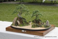 Penjing / Landscape Bonsai on a rock