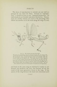 Insects, their ways and means of living (1930)