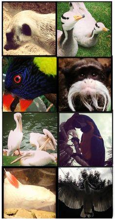 Monte Casino Bird Gardens - Montecasino Boulevard (Cnr William Nicol and Witkoppen) Fourways, Sandton Places To Visit, Gardens, African, Spaces, Bird, Beach, Animals, Animales, The Beach