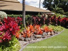 Three simple steps to a show-stopping tropical landscape design. The most beautiful plants to use when landscaping tropical yards. How to add year-round color to tropical landscapes. Florida Landscaping, Tropical Landscaping, Front Yard Landscaping, Backyard Landscaping, Landscaping Ideas, Landscaping Software, Landscape Borders, Landscape Design Plans, Tiered Landscape