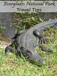 Everglades National Park Travel Tips Could be a cool place to go!!