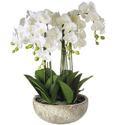 Potted Faux Phalaenopsis Orchid - 560mm – Allissias Attic