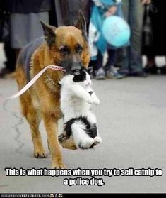 Too funny! Everything you want to know about GSDs. Health and beauty recommendations. Funny videos and more
