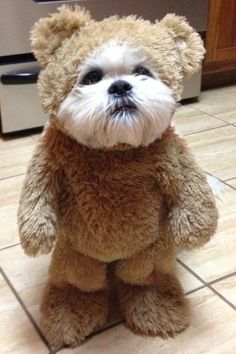 Get me outta this thing! & How-To: Make a Walking Teddy Bear Costume for Your Dog | Pinterest ...