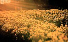 flower picture 1080p windows, 2560x1600 (700 kB)