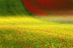 <i>Beyond dreams</i>. The plain of Castelluccio Landscape in flowering. Sibillini Mountains National Park, Italy.