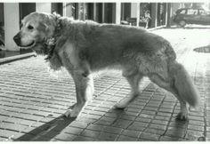 @_SrPerro: Displasia de cadera en perros: cómo detectarla y tratarla http://ow.ly/utD5J