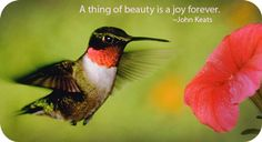 The prime message of the hummingbird animal totem is: The sweetest nectar is within!