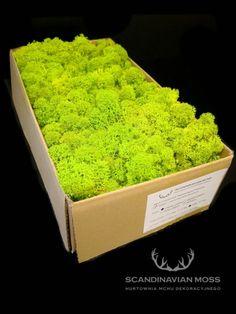 MECH CHROBOTEK SPRING GREEN - JASNA ZIELEŃ - 500g 7700425810 - Allegro.pl Scandinavian, Japanese, Spring, Ethnic Recipes, Japanese Language