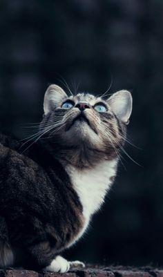 Beautiful eyes!