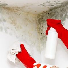 How to Remove Mold From Walls With Bleach and Baking Soda