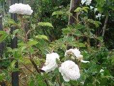 blog di Sara: Vieni nel mio giardino...anche se sta piovendo!