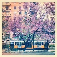Tram #milan #instagram #spring #android