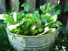 Grow a salad in a container