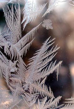 frost plumes