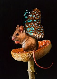 Artist Creates Mythical Hybrids of Mice and Butterflies Called 'Mouserflies'