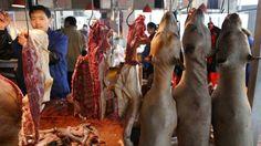 Eklig oder Geschmacksache? In China werden Hunde als Delikatesse verkauft