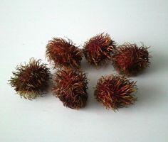 http://jungletropicale.com/2013/04/nephelium-lappaceum/    #jardinage #fruits    Cliquer l'image pour lire l'article.
