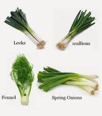 Imagini pentru onion greens