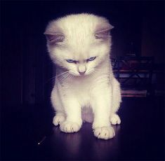 10+ Angry Kittens Who Demand To Be Taken Seriously Right Meow