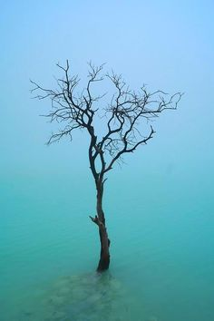 """mistymorningme: """"The Lonely Tree © Gondho Onaka """" Beautiful World, Beautiful Places, Science, Growing Tree, World Of Color, Love Photos, Front Yard Landscaping, Natural Wonders, Terra"""
