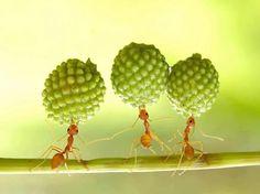 lovely 3....
