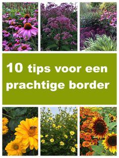 10 tips voor een prachtige border Vegetable Garden, Garden Plants, Creative Landscape, Living Vintage, Garden Borders, Plant Sale, Samos, Dream Garden, Go Outside