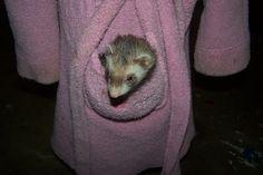 Daisy in  a pocket....