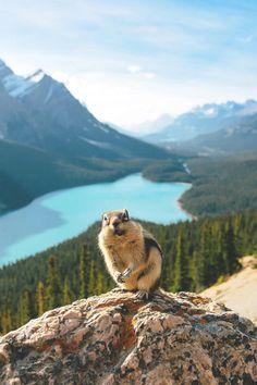 'Mystical'.. Peyto Lake, Alberta, Canada.. en Tumblr