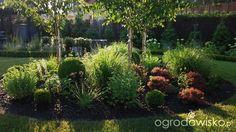 W Kruklandii - strona 1459 - Forum ogrodnicze - Ogrodowisko