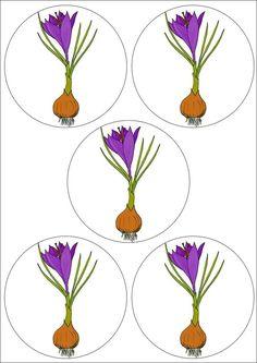 Butterfly Flowers, Spring Flowers, Blue Nose Friends, Kids And Parenting, Kindergarten, Clip Art, Jar, Bows, Activities