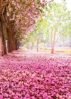 Pink Trees Flowers Romantic Photography Backdrop S-628