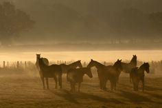 misty morning by wolfman57 - 800 Horses Photo Contest