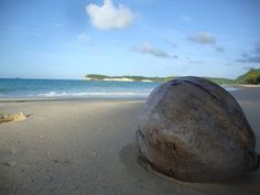 Coconut on the beach in Marie Galante Island, French West Indies