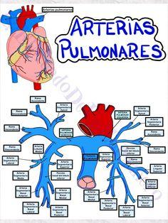 Medical Art, Medical Science, Medical School, Medicine Notes, Medicine Student, Shoulder Anatomy, Study Organization, Icu Nursing, Medical Anatomy
