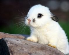 Cute White Baby Bunnies Hd Pictures 4 HD Wallpapers