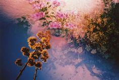 #Lomography #flowers #PlantKingdom