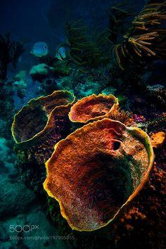 Coral vulcanos by apopovschi #nature #photooftheday #amazing #picoftheday #sea #underwater