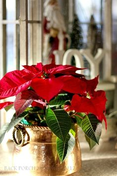 Specially For Christmas Christmas Tale Christmas Poinsettia Christmas Flowers Christmas Morning Little