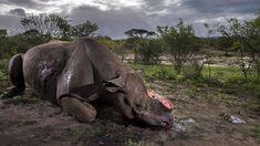 Petizione · I HAVE A DREAM: Die Welt ohne Tierleid. · Change.org