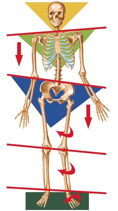 The effects of having unleveled hips and shoulders!
