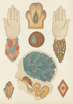 Juxtapoz Magazine - The Scientific and Anatomical Illustrations of Katie Scott Art And Illustration, Illustrations Médicales, Medical Illustration, Botanical Illustration, Arte Com Grey's Anatomy, Anatomy Art, Gravure, Kitsch, Art Inspo